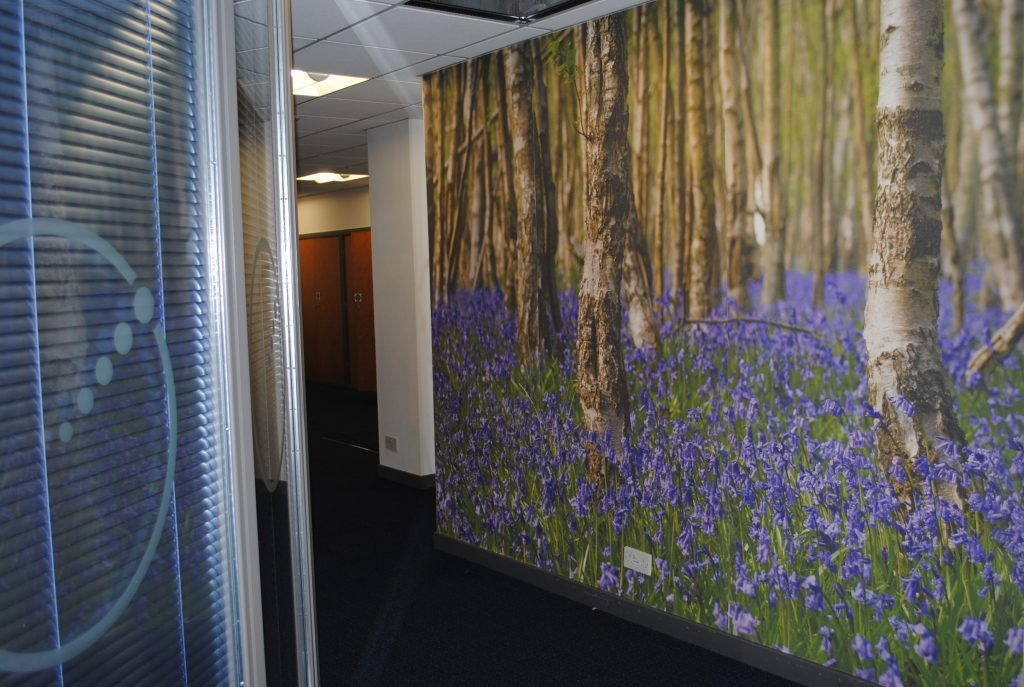 Wall Graphic Woodland